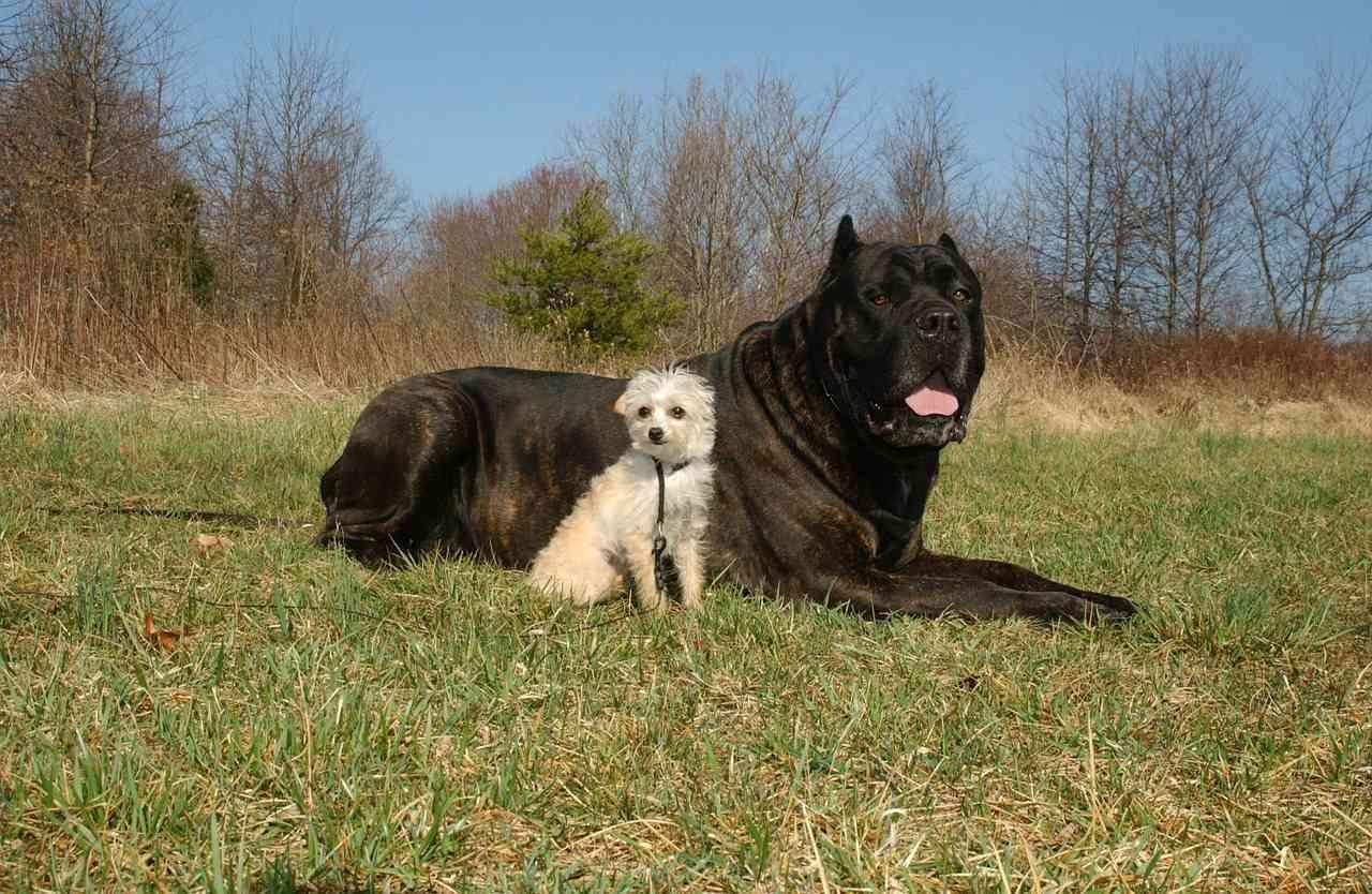I Cani di Razza